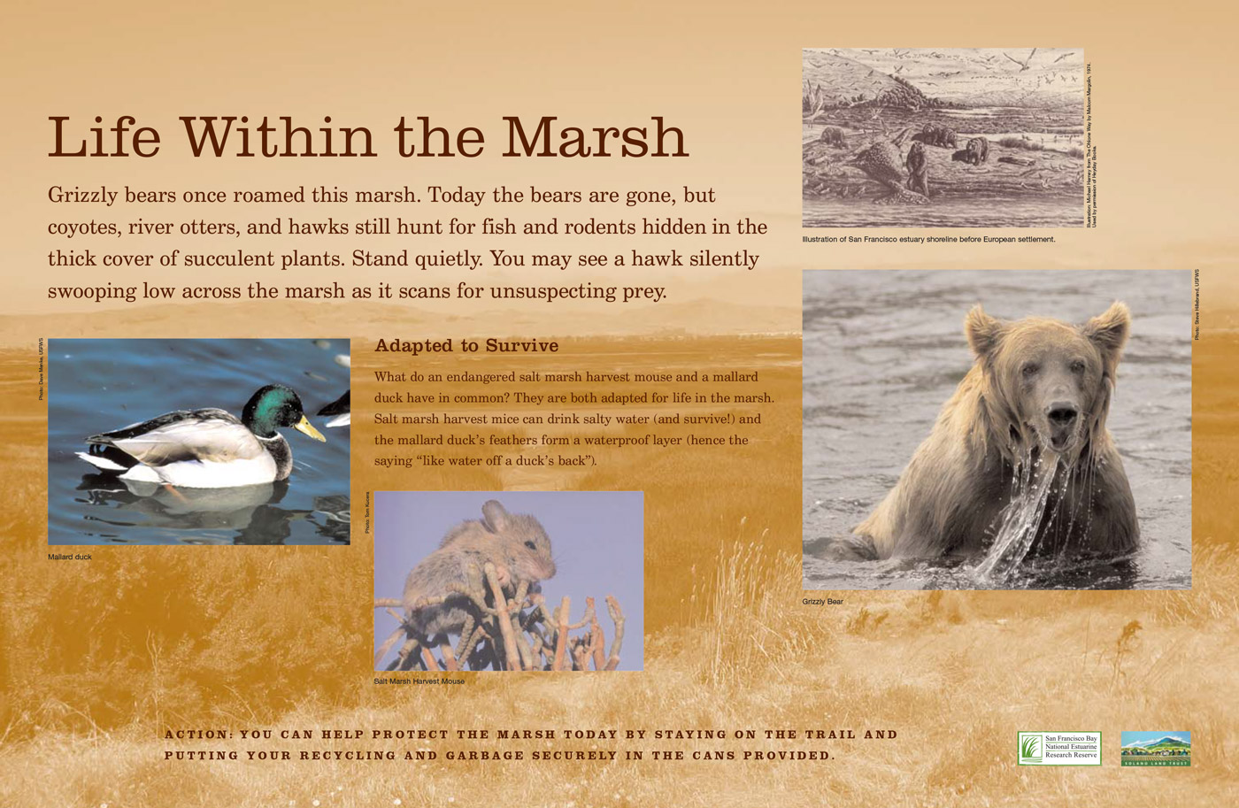 Rush Ranch Interpretive Graphics
